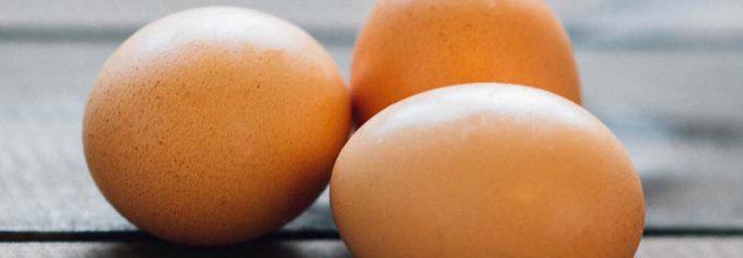 Eggs Salmaonella